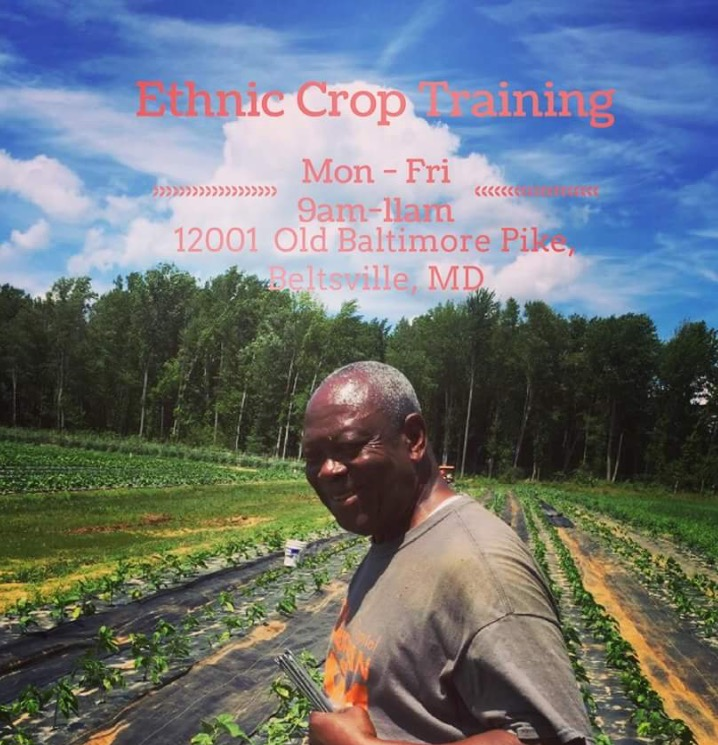 Learn about ethnic crop growing from seed, to field to table. Join us every Friday at the Firebird campus for hands-on learning and volunteering at the UDC Research Farm -- all are welcome!  Contact Lauren Goodwin (Lauren@purplelovesbleu.org) to confirm your attendance for any time, Monday - Friday 9am-11am. Please bring water,  a light snack and dress comfortably as we will be located out in the farm and will have little access to amenities with slightly muddy conditions.