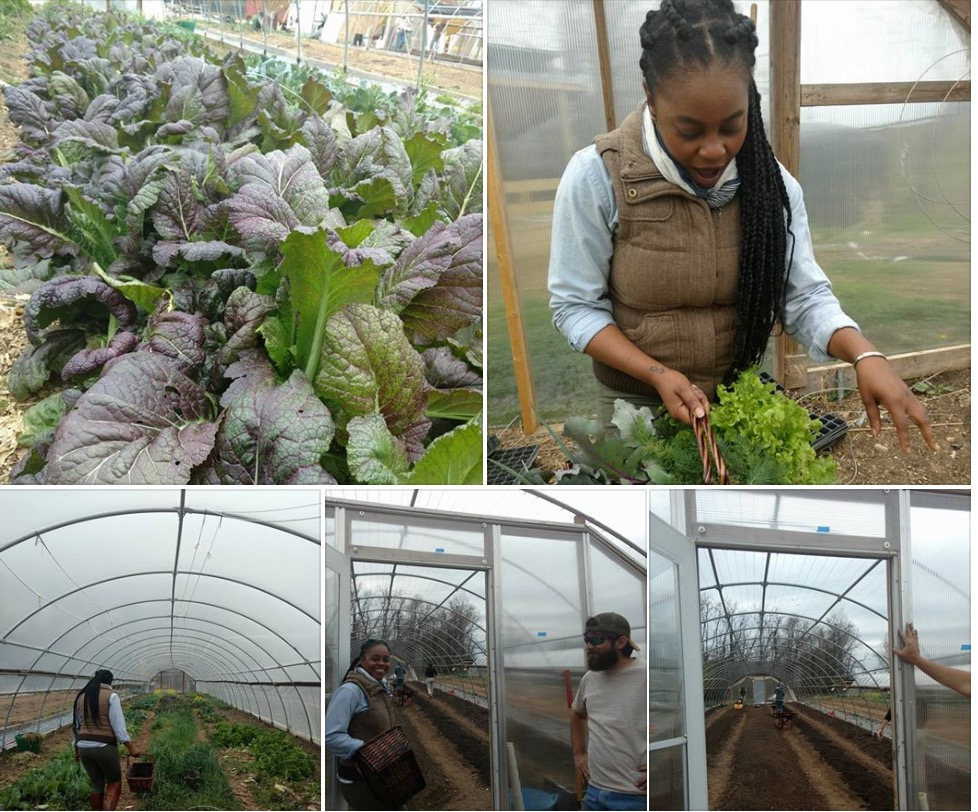 Learn about ethnic crop growing from seed, to field to table, or have My Grow Connect pick your crop on your behalf. We also pick and sell to local grocery retailers and farmers markets in Maryland, Washington, D.C. and Virginia. For volunteer and training opportunities contact Jennifer@MyGrowConnect.org.